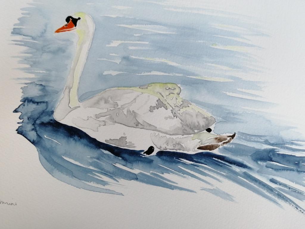 'Watercolour Swan'